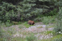 top-things-to-do-in-canada-bear