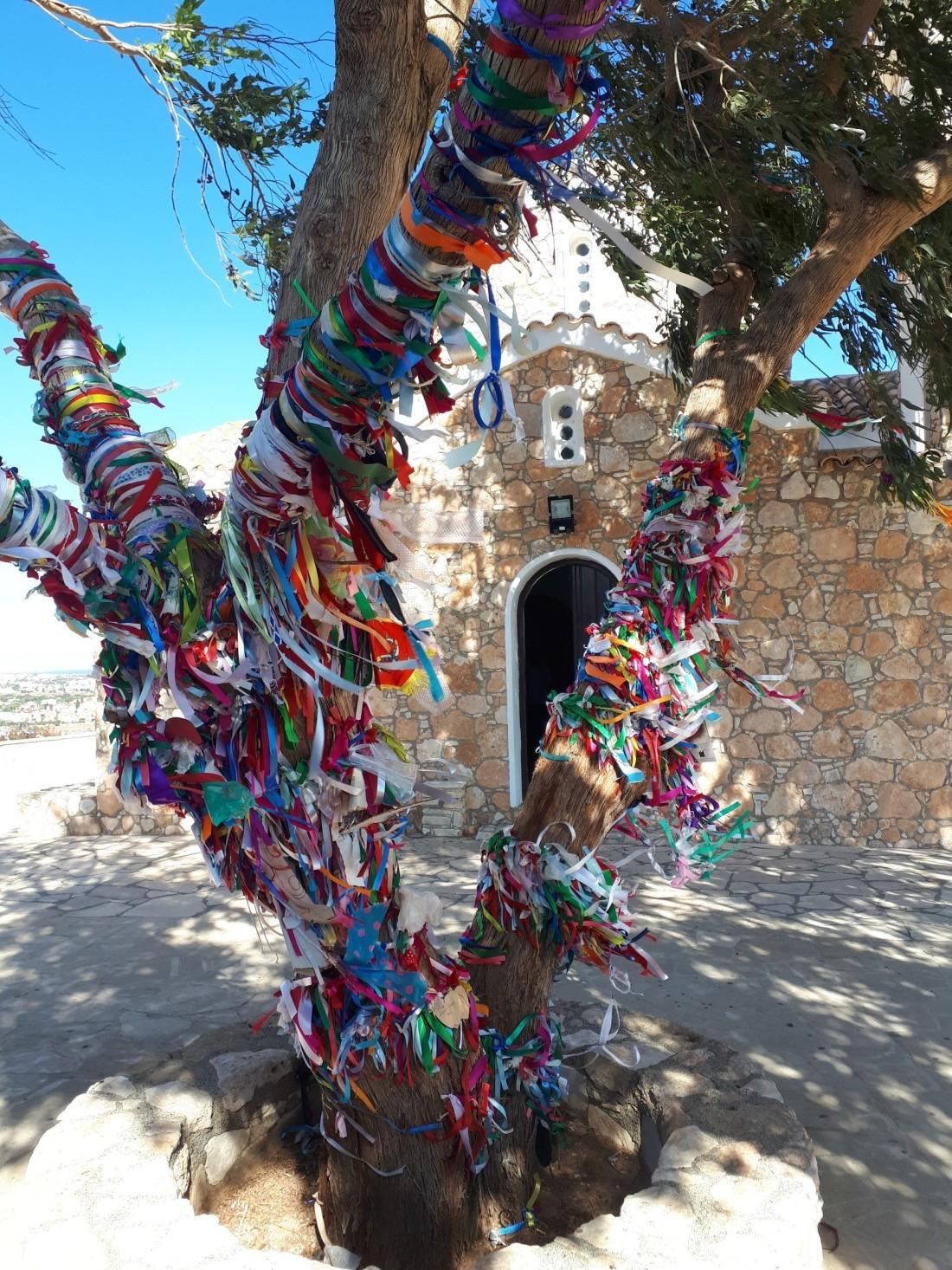 Cyprus_tree